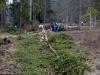 maibaum_2012_068